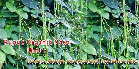Benih Kacang Panjang Nasa apalikasi pupuk organik nasa untuk tanaman kacang panjang