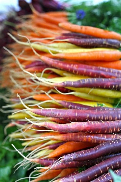 different colored carrots 17 best images about multi colored fruits and vegetables