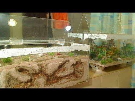 Bibit Lobster Air Tawar Di Semarang cara memelihara semut di aquarium 09 cara merawat