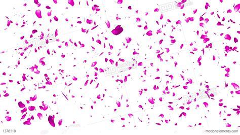 Falling Flower Petals After Effects Template Free Falling Flower Petals After Effects Template Free
