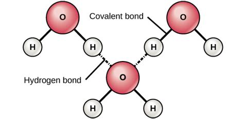 diagram of water molecule 2 1 the building blocks of molecules concepts of biology
