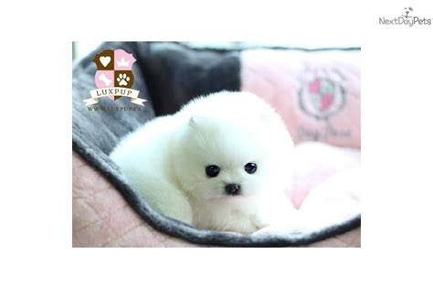 marshmello dog video cute girl names with a d