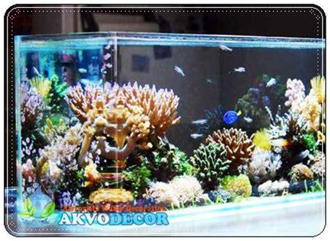 Lu Aquarium Dalam Air hal hal yang perlu diperhatikan dalam memilih air laut