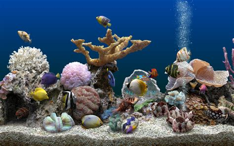 serenescreen marine aquarium download serenescreen marine aquarium 2 6 crack atulorles