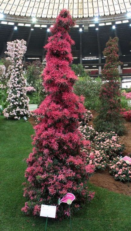 fiera fiori genova euroflora fiera di genova