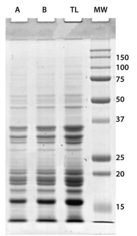 b protein biologicals a host cell protein assay for biologics expressed in