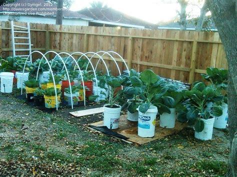 Specialty Gardening: 5 gallon bucket gardens/planters., 1