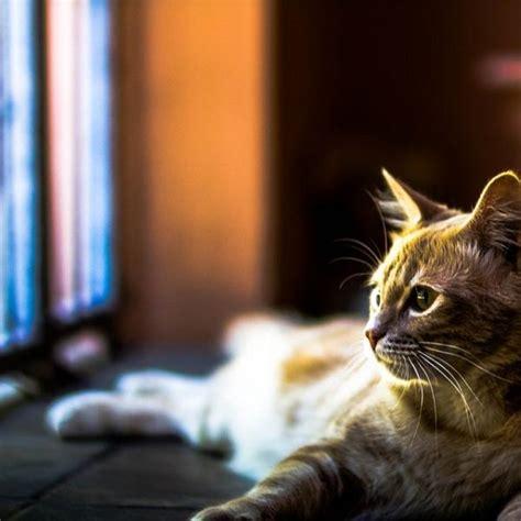 mascotas para un piso los mejores gatos para tener en un piso