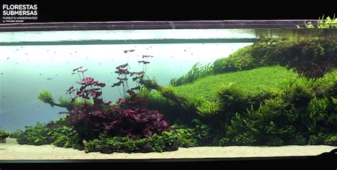 Aquascaping Reef Tank World S Largest Nature Aquarium Is An Inspirational