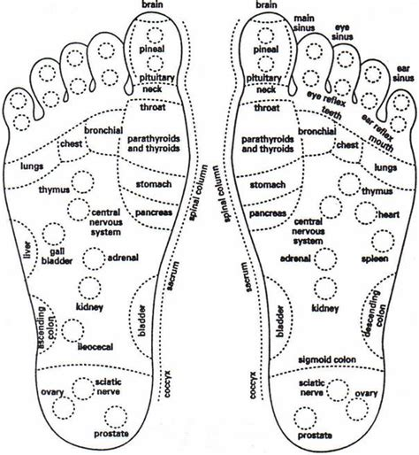 foot diagram bone archives page 17 of 21 human anatomy charts