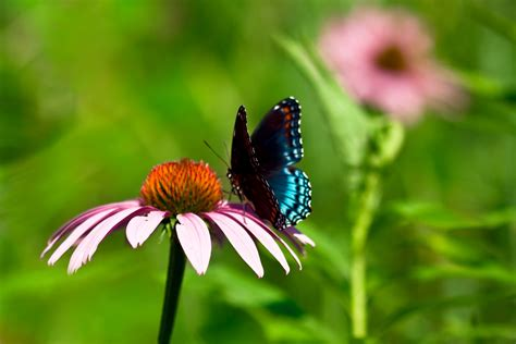 8 Brilliant Festivals This Year by Free Brilliant Butterfly Stock Photo Freeimages
