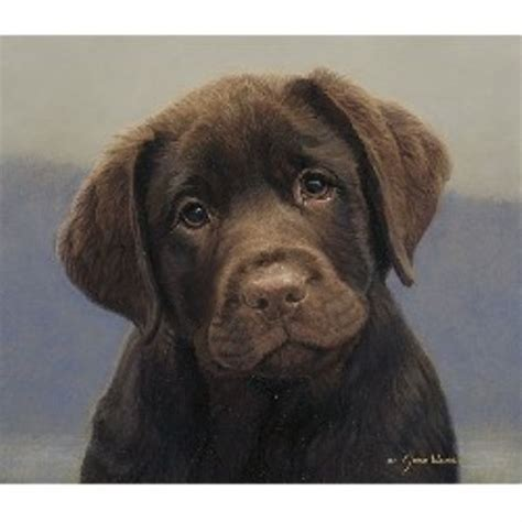 breeders in maryland belquest labrador retrievers labrador retriever breeder