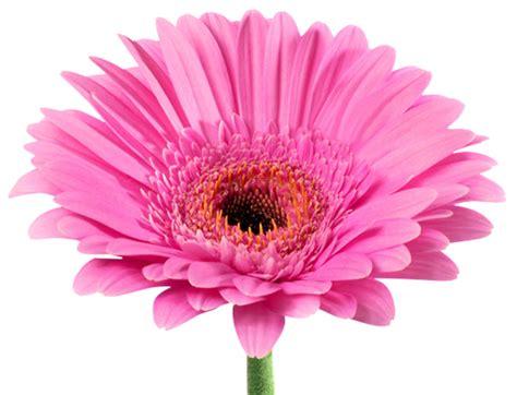 fiori on line fiori e piante on line idee per interni e mobili