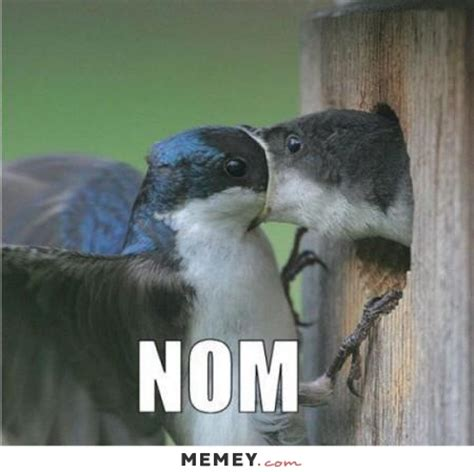 Funny Bird Memes - bird memes funny bird pictures memey com