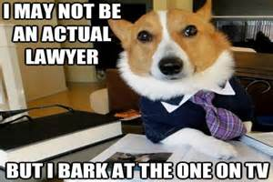 Lawyer Dog Memes - how to make a 2012 meme costume