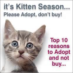 Top 10 Reasons To Adopt A by Adopt A Rescue Cat Or Kitten Uk And Ireland Cat Chat