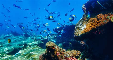 dive vacation a haiti scuba diving vacation