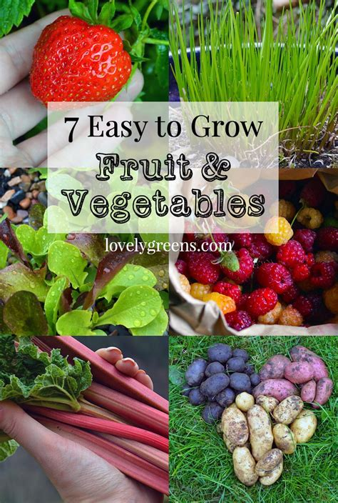 vegetable gardening how to grow vegetables the easy way books 7 easy to grow fruits vegetables lovely greens
