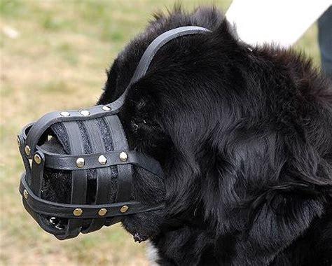 newfoundland weight leather basket muzzle for newfoundland m41 1062 newfoundland muzzle