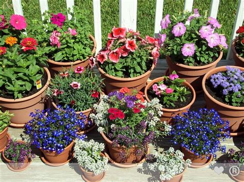 Garden Flower Pots Authentic Pharmaceuticals Ltd Garden Flower Pot And