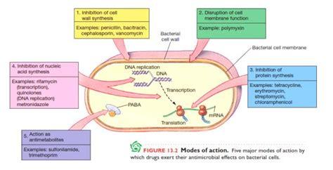 mekanisme kerja induktor dan kapasitor mekanisme dan penyebab bakteri kebal antibiotik oleh rahmad agus koto kompasiana
