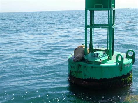 duck boat santa barbara santa barbara land shark all you need to know before you