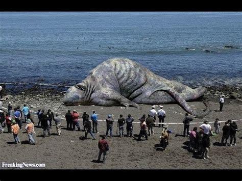 film giant monster in the sea giant sea monster found dead in khmer krom cambodia