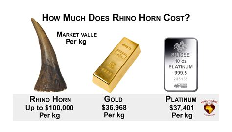 How Much Does An Mba Cost In South Africa by How Much Does Rhino Horn Cost Http Www