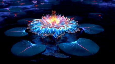 blue lotus flower high blue lotus flower wallpaper