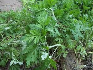 glory s garden drastic measures against weeds