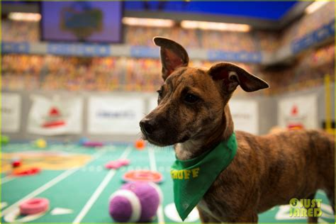 what time is the puppy bowl on today puppy bowl 2017 meet the dogs the more photo 3853430 2017