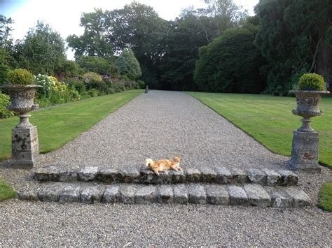 Pet Resort In The Gardens by Marlfield House Gardens Picture Gallery Of Marlfield Gardens