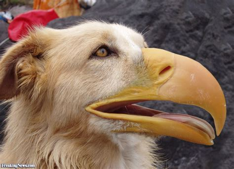 bird dogs bird pictures freaking news