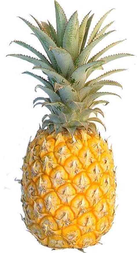 pineapple  images  clkercom vector clip art