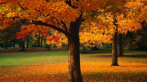 Colourful Wall Stickers autumn trees wallpaper nature wallpapers 13287
