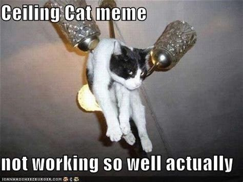 Ceiling Cat Meme - ceiling cat meme not working so well actually cat memes