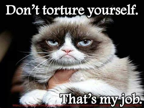 Grumpy Cat Coma Meme - 1000 ideas about study meme on pinterest asian dad