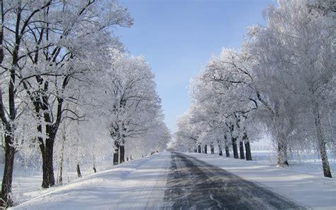 Winter Trees Road Fields Snowy Wallpapers Winter Trees