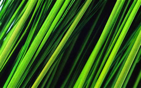 background rumput gambar gambar rumput yang tinggi wallpaper