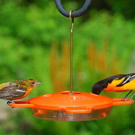 window mount oriole feeder wiring diagrams repair wiring