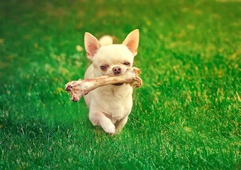 can dogs digest bones 28 safe alternatives to rawhide chew treats keep the wagging