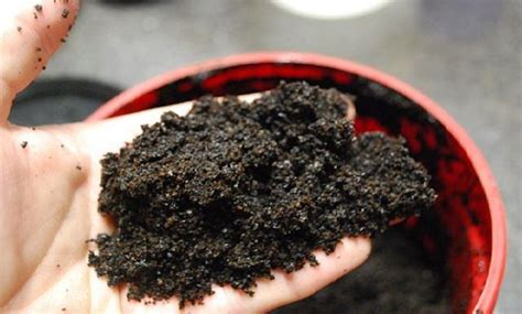 coffee grounds garden pests 22 gardening hacks that ll change the way you garden
