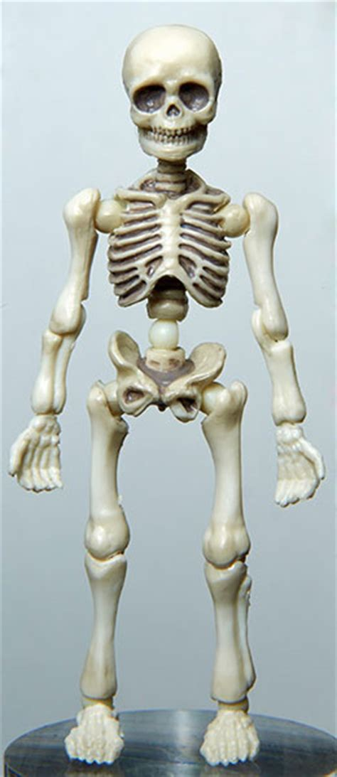 Re Ment Pose Skeleton Accessory Door Set amiami character hobby shop pose skeleton human 01
