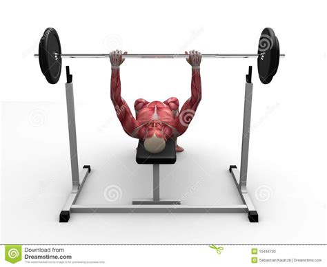 bench press workouts male workout bench press stock photo image 15434730