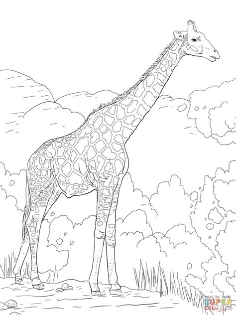 difficult giraffe coloring pages get this realistic giraffe coloring pages for adults 66218