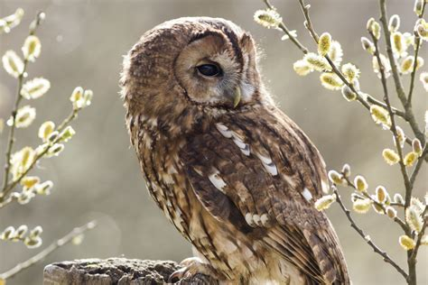 owl portraitures shannon darcy photography