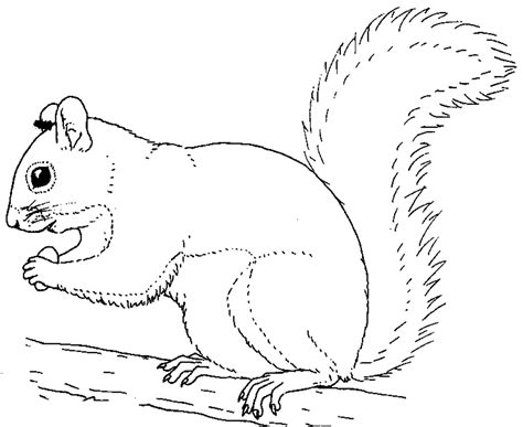 imgs for gt squirrels coloring pages