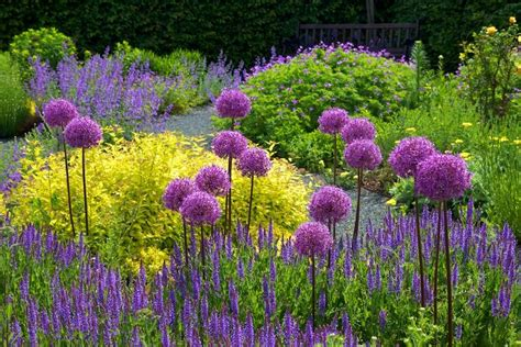 Bilder Gärten by Purple Adds So Much In Your Garden Use Plants Like