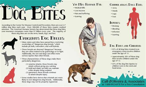 house dog bite dog bites other infographics