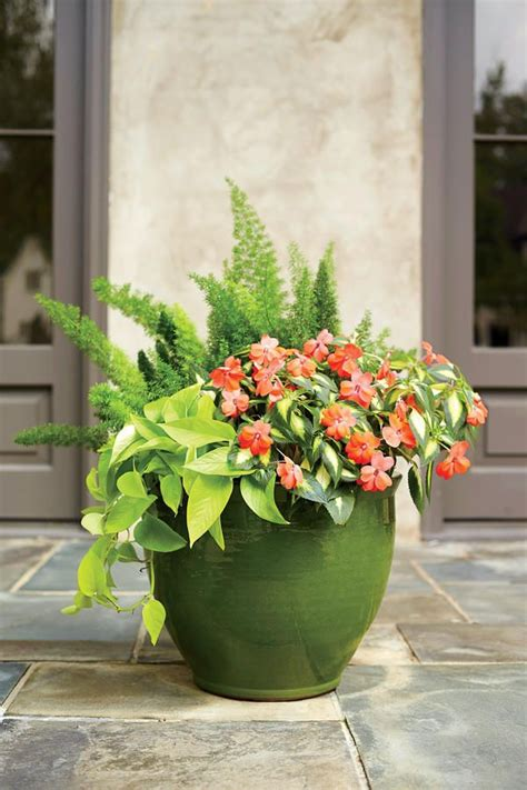 sun container garden ideas 1299 best images about outdoor plant containers on